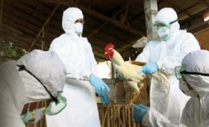 Konfirmohen rastet e para të Gripit të Shpendëve në Shqipëri/ Ministria: 'Po monitorojmë situatën!'